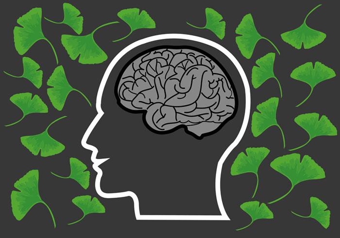 brain boosting herbs